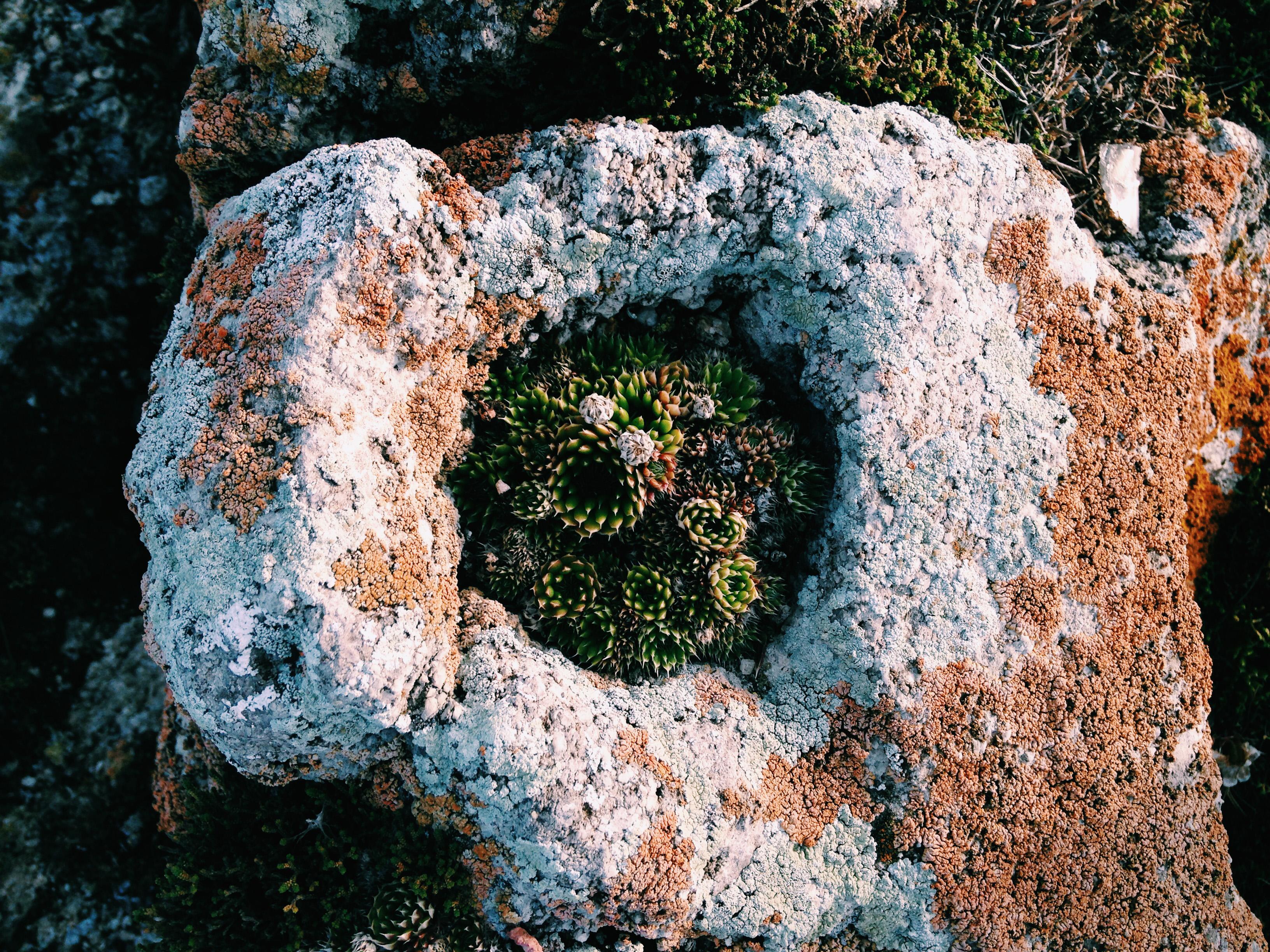 Камнеломки оправдывают свое название