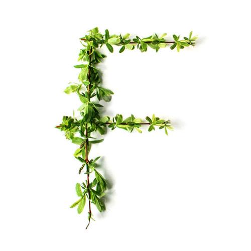 flor_logo_folio